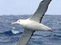 albatross_070305