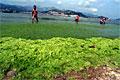 algaebloom_220610