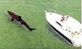 basking-shark_170807