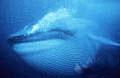 blue_180603