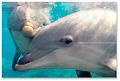 bottlenose_dolphins_170905