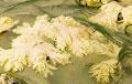 coral-bleaching_060610
