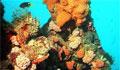 coral-britain_040809