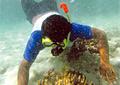 coral-diver_030510