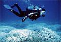 coral-diver_050710