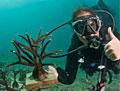coral-diver_070412