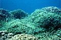 coral-reef_010808