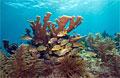 coral-reef_091110
