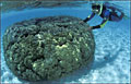 coral_020109