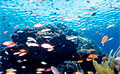 coral_150909