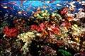 coral_reef_07022005