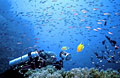 corals_060213