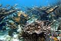 corals_080607