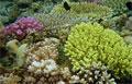 corals_240409