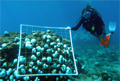 divers-counting_011207
