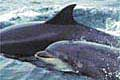 dolphins_11022005