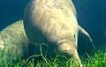 dugong_220405