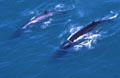 fin_whales_140405