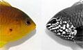 fish-marking_280210