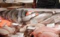 fish-shop_050511