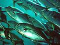 fish_290705