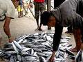 fishseller2_301205