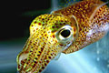 glowing-squid_101111