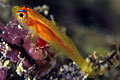 goby_110505