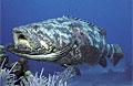 grouper_220808