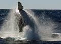 humpback_200309