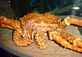 king-crab_070911