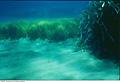 marine_habitat_050807