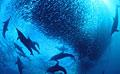 migrating-fish_050409