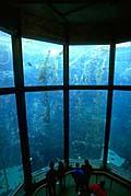 monterey_aquarium_251207