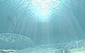 oceanfloor_050205