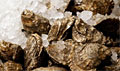 oysters_140211
