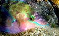 parrotfish_221110