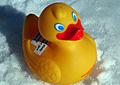plastic-duck_211208