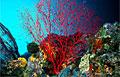 reef_110807
