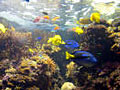 reef_180603