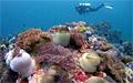 reef_260710