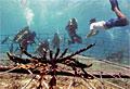 reefs_210212