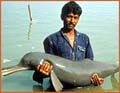 river_dolphin_010405