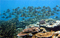 samoa-reef_081009
