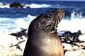 sea-lion_080210