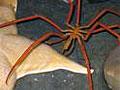 sea-spider_190208