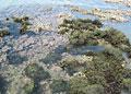 sea-weed_180311
