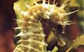 seahorse_081109