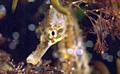 seahorse_140709