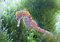 seahorse_300904